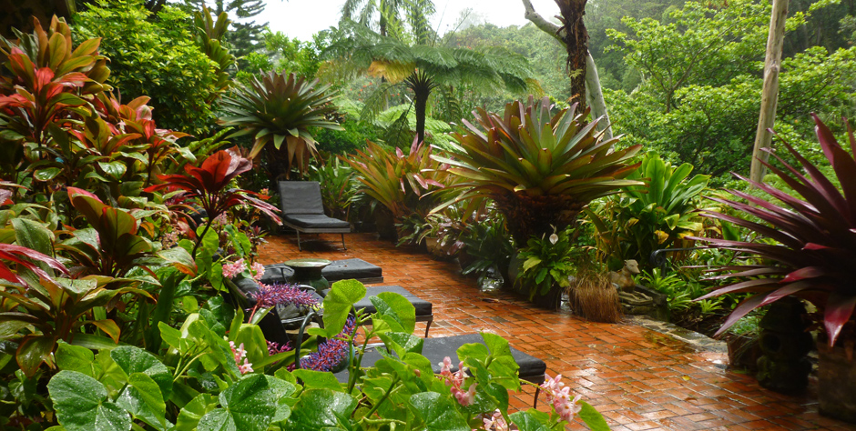 Tropical Gardens of Hawaii with Graham Ross | Ross Garden ... on Tropical Backyard  id=42335