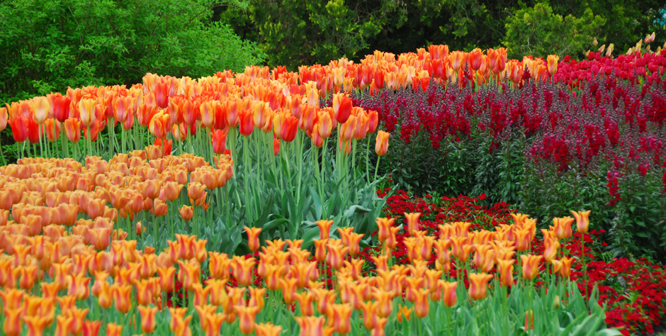Superb Longwood Gardens, Brandywine Valley In Spring