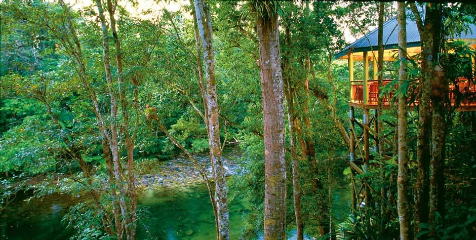 incredible tropical garden brisbane | Queensland Tropical Gardens | Ross Garden Tours